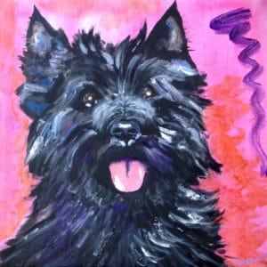 Cairn Terrier 2017