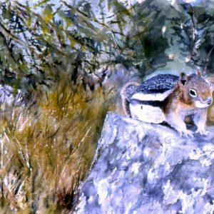 Golden Ground Squirrel (8.5 x 11 in. Print)